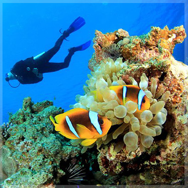 Coral Reef Conservation Specialty Hurghada